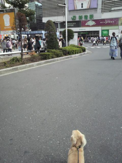新宿を歩くなう