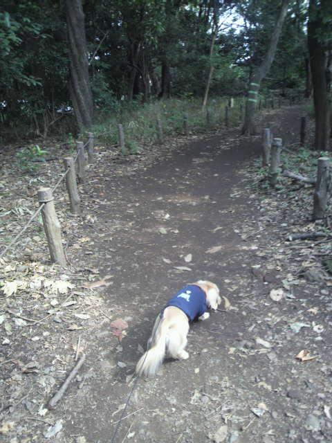 秋の森の中なう